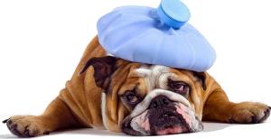 Lincoln Park Chiropractic - Avoiding Headaches - Wellness