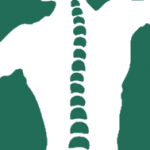 Lincoln Park Chiropractic & Sports Associates